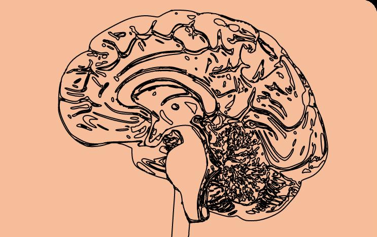 cerveau enfant dyslexique